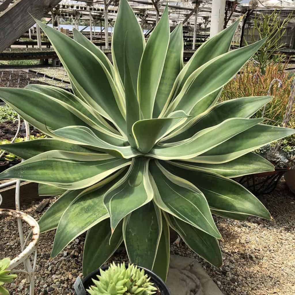 Where To Buy Succulents 7 Best Places To Buy Succulents Online 2020