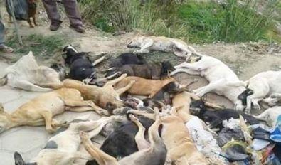 Matança de cães volta a acontecer no Vale do Piancó e revolta população