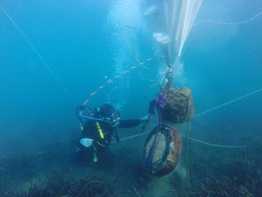 Studies on the preservation of Neptune seagrass on the Catalonian coast