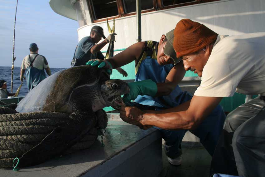 Formación de pescadores en las mejores técnicas de manipulación y liberación de tortugas marinas capturadas incidentalmente