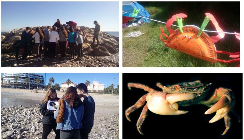 Crab Watch