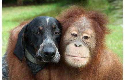 Pravi prijatelji