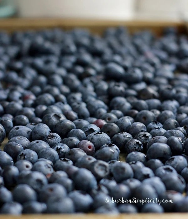 Blueberries for BlueBerry Cobbler