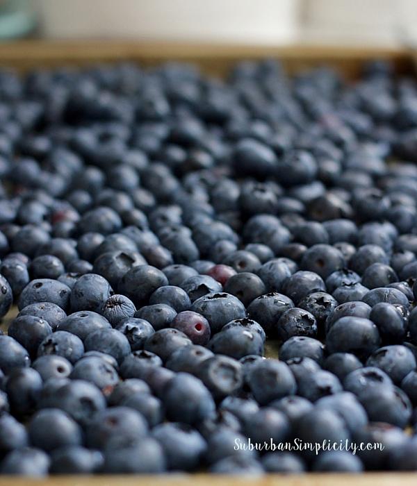 Blueberries for BlueBerry Cobbler