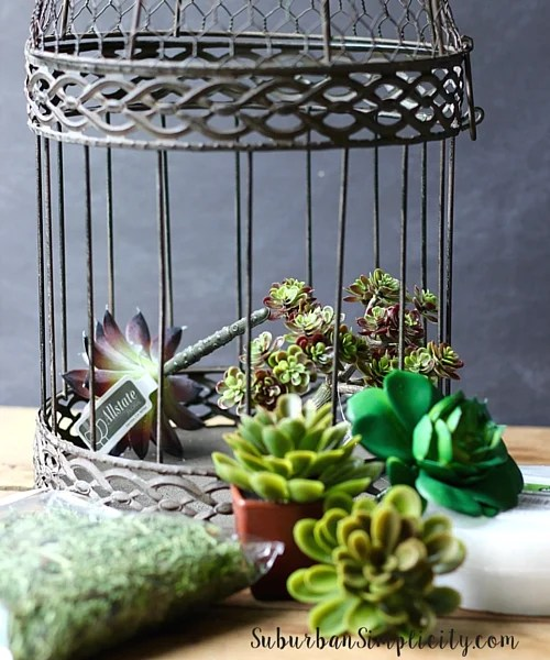 Decorate with Succulents Supplies