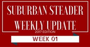 2017 Suburban Steader Update – Week 01