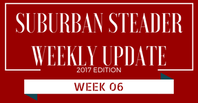 2017 Suburban Steader Update – Week 06