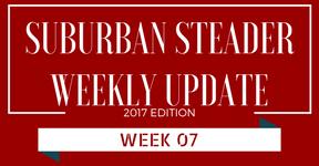 2017 Suburban Steader Update – Week 07