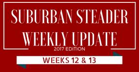 2017 Suburban Steader Update – Week 12 & 13