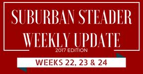 2017 Suburban Steader Update – Weeks 22, 23 & 24