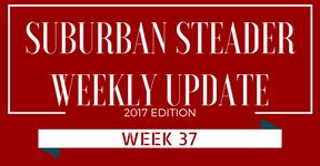 2017 Suburban Steader Update – Week 37