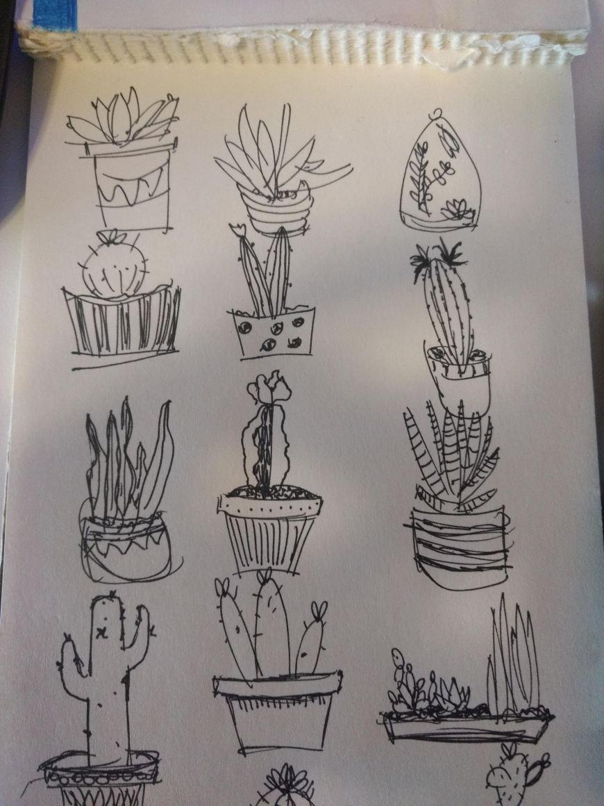 hand-drawn succulents