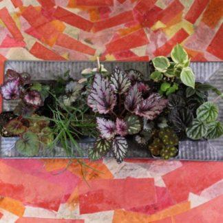 small mystery houseplants
