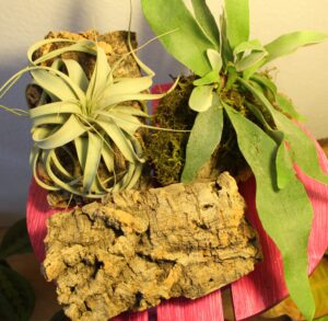 mounted plants on cork