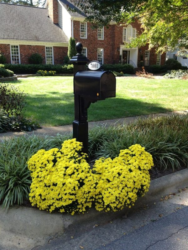 spruce mailbox