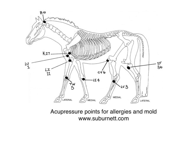 Acupressure points for allergies and mold