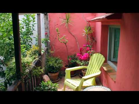 Successful Garden Design Tips 2 – How to use colour in the garden effectively…