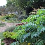 Successful Garden Design Tips – Wonderful Winter Planting