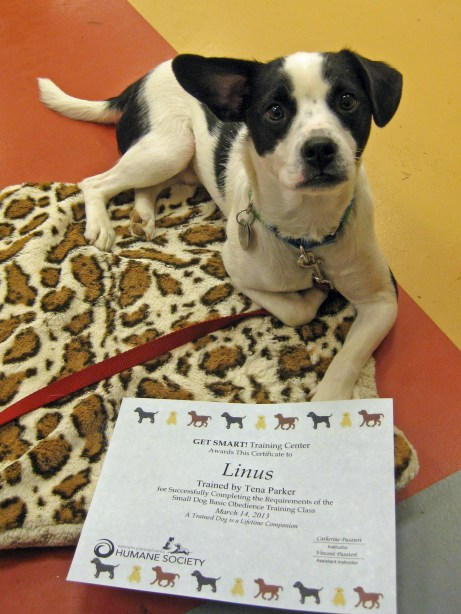 Cutie pants Linus with his hard earned diploma!
