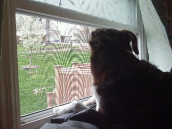 Shayne watching out our window--we live on a corner and have two windows that provide over 300ft of street views.
