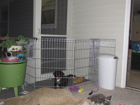 While hanging out on our back porch, puppy had his own little corner to keep him contained and out of trouble!