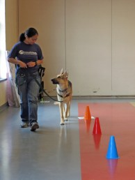 Greyson running a rally course, working on a Spiral Left, Dog Inside.