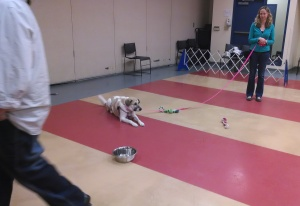 Gracie prepares for the MA CLASS evaluation in a group class environment.