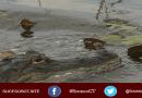 foto de un caimán en un lago