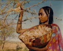 فرنسا تستورد 60% من احتياجاتها للصمغ العربي من السودان