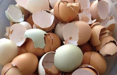 اكتشفي أسرار البيض في محاربة سرطان الثدي