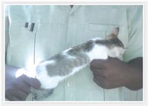 سوداني يعثر علي اسم  «محمد» في الشق الأيمن لقطة