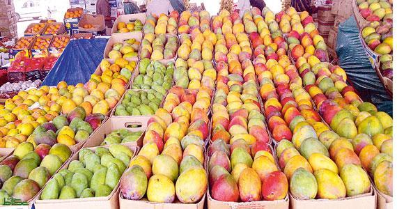السودان يستأنف تصدير المانجو لمصر بعد توقف طويل