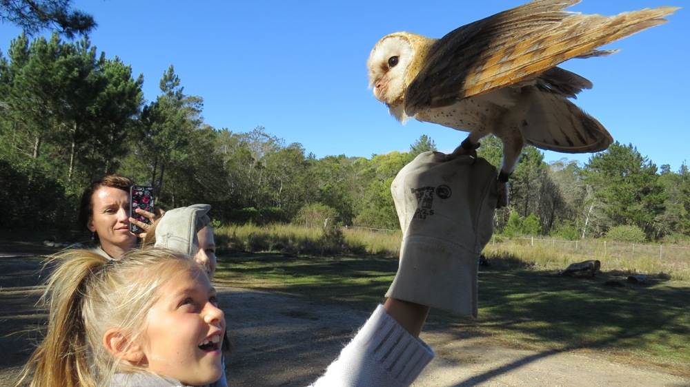 Katie and barn owl
