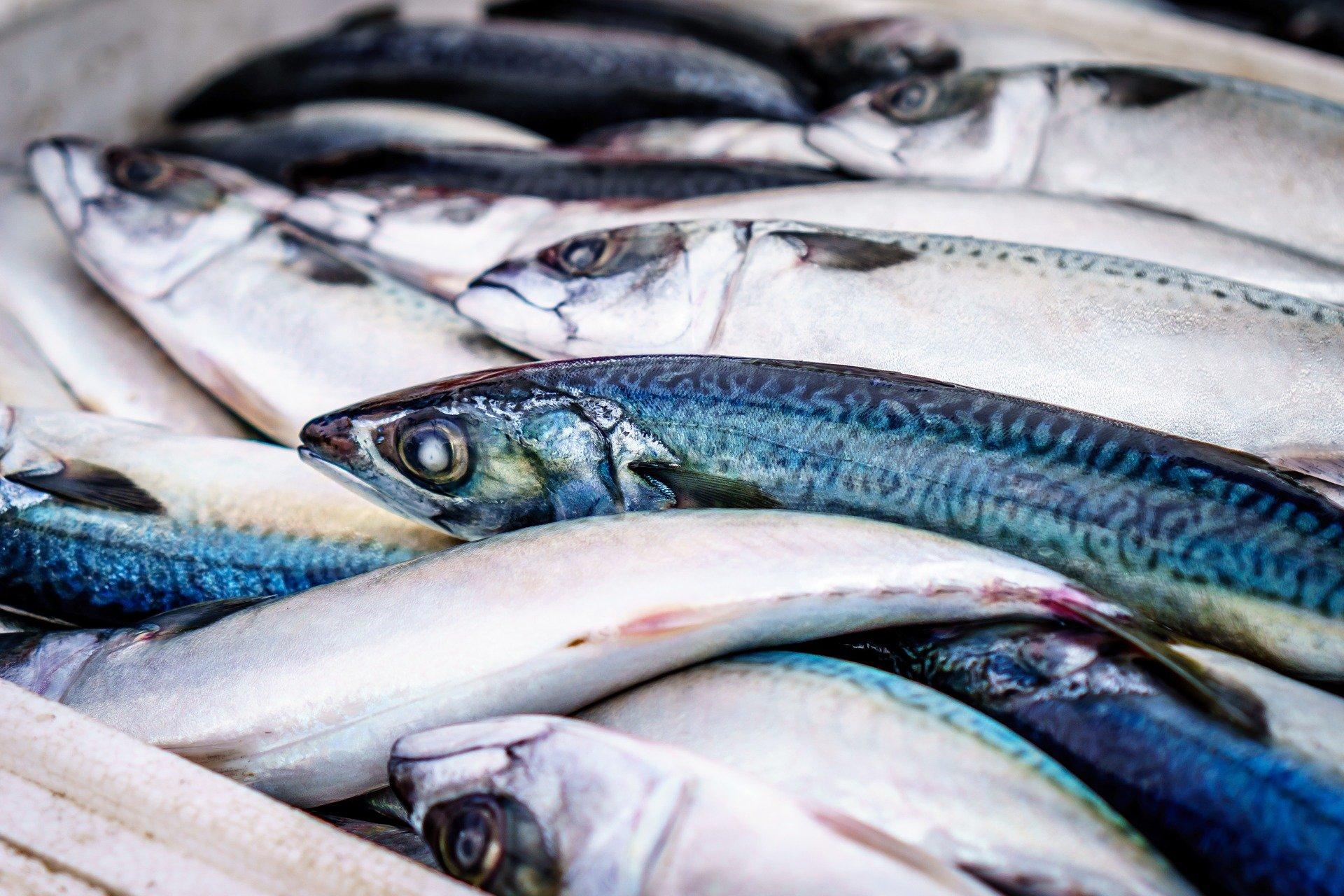 Pesce buono e consapevole