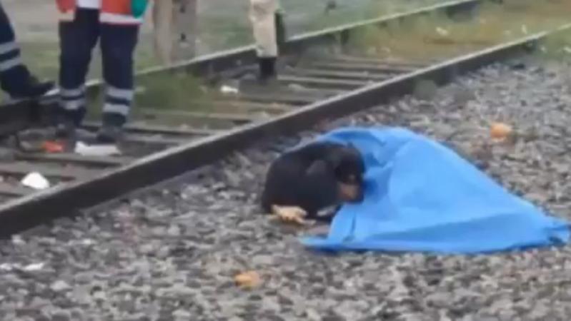 Un homme percuté par un train au Mexique: les images déchirantes d'un chien qui refuse de quitter son maître décédé (vidéo)