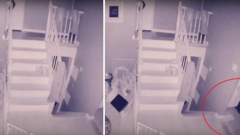 L'étrange apparition sur les images filmées par Joey: «C'est le fantôme d'un enfant en train de jouer avec l'animal de compagnie» (vidéo)