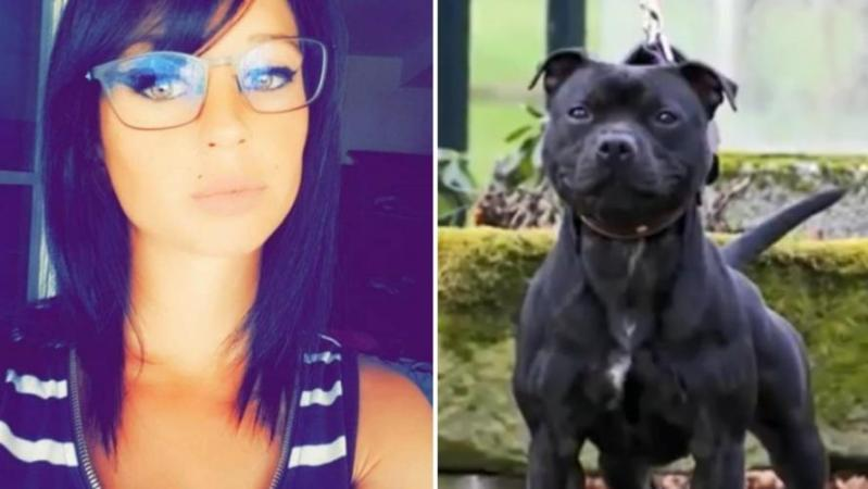De nouvelles révélations accablent Curtis, le chien d'Elisa Pilarski, morte dévorée: sa maman Black Bitch a participé à des «face-à-face»!