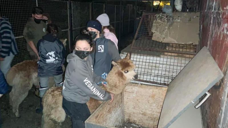 Une trentaine d'animaux maltraités saisis dans une école coranique à Forest: «Je n'ai jamais vu des conditions de détention aussi pitoyables»