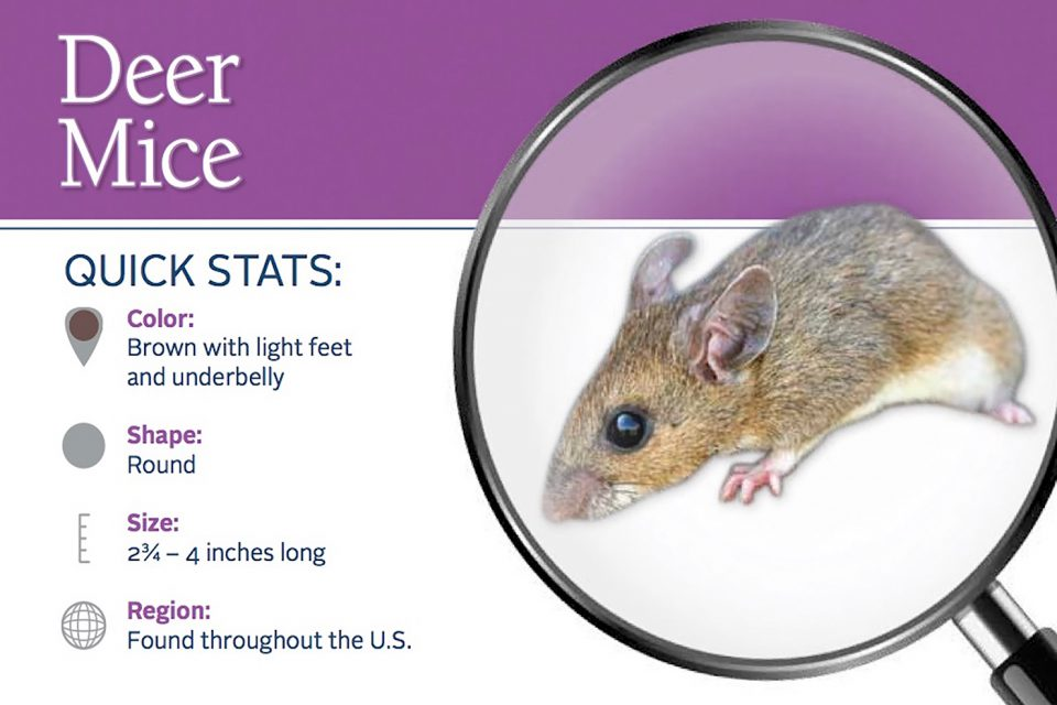 The Southern Ute Drum | State and Regional cases of Hantavirus ...