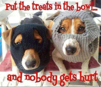 doggie robbers