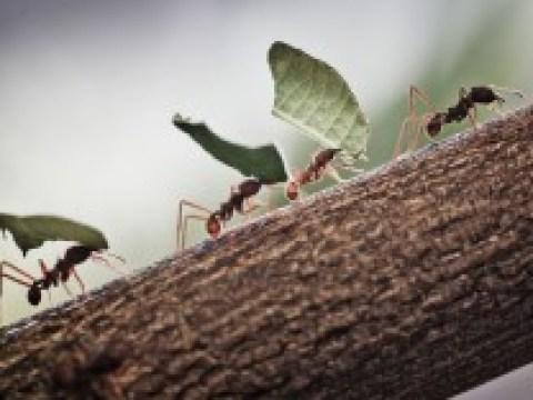 Insekten: Faul wie eine Ameise