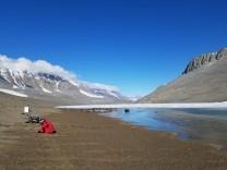 Erderwärmung: Erderwärmung könnte Antarktis ergrünen lassen
