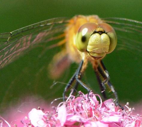 07-21-2014 365 dragonfly