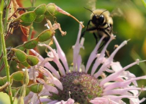 Puzzle Bee in Flight
