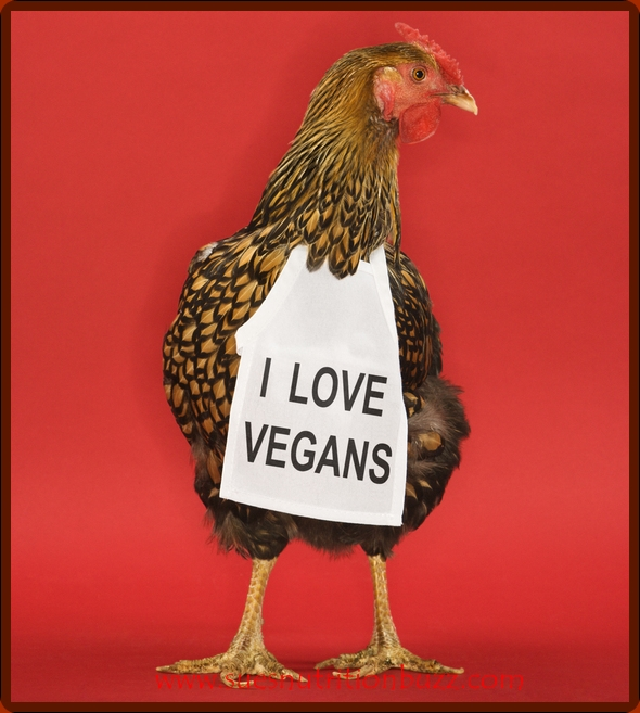 Vegging Out : Pros & Cons Of a Vegan/Vegetarian Diet