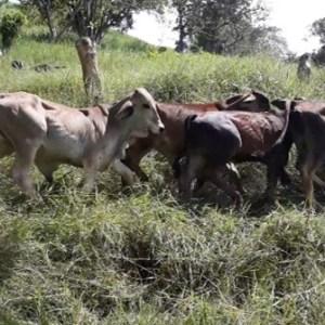 Venta de ganado