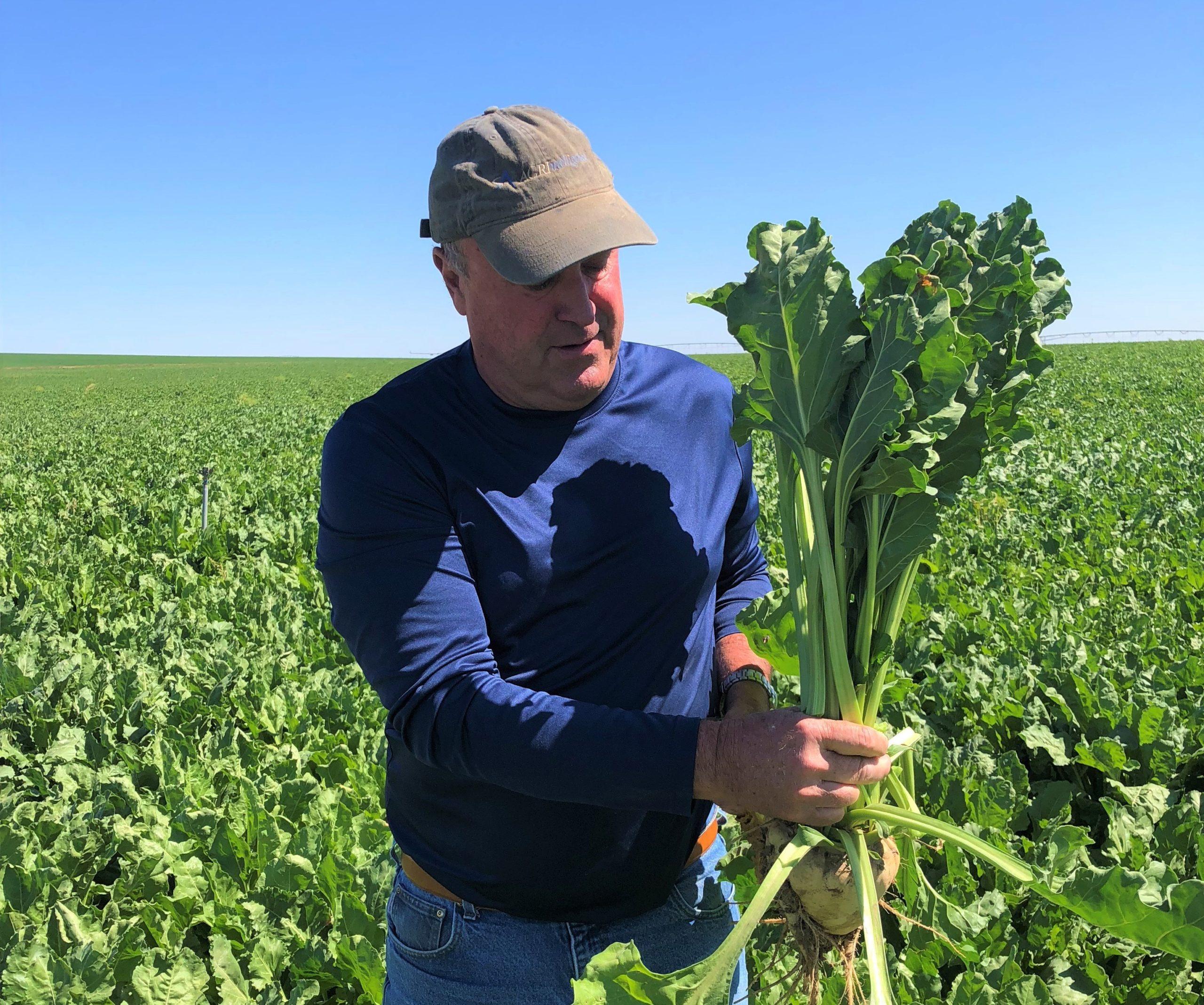 Randy Grant in Sugar beet Field