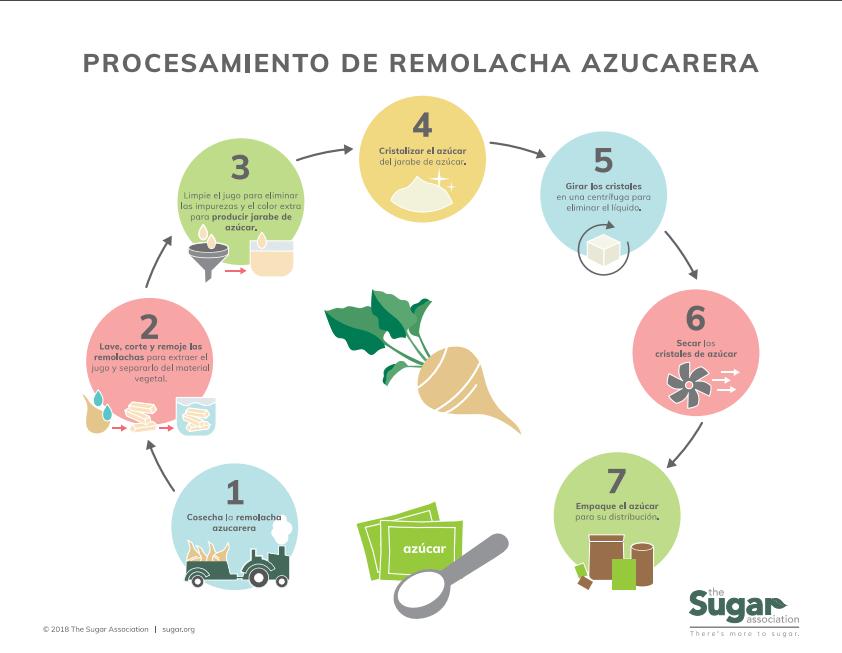 Infografía de procesamiento de la remolacha azucarera