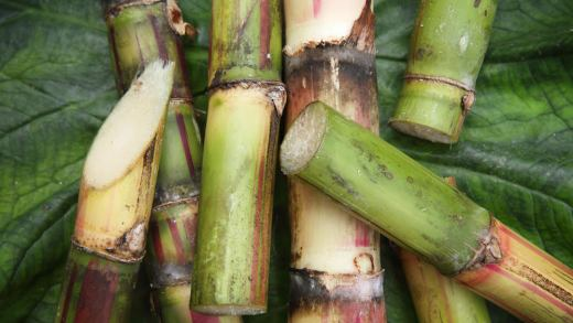Detail of Fresh Cut Pieces of Sugar CaneSEE my other photos from JAMAICA: