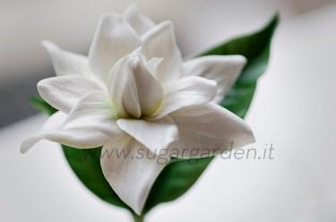 Gardenia 1